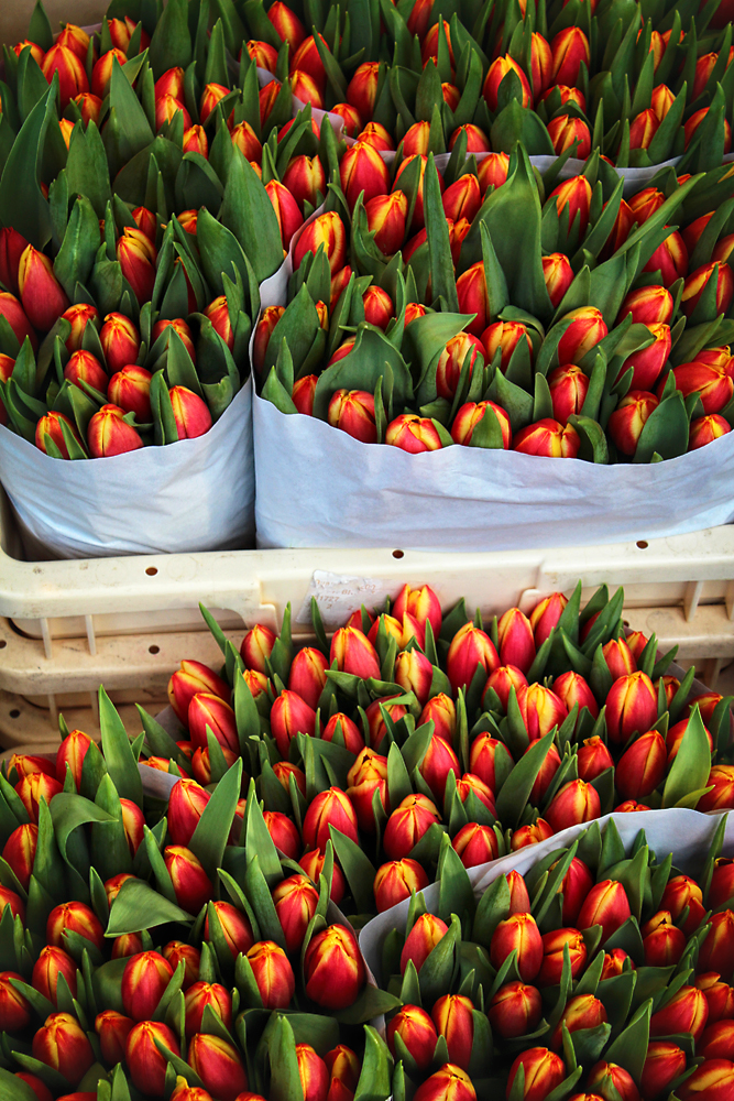 Tulips can be found in a variety of colors at the Bloemenmarkt. Image Credit: Travel Photographers Magazine