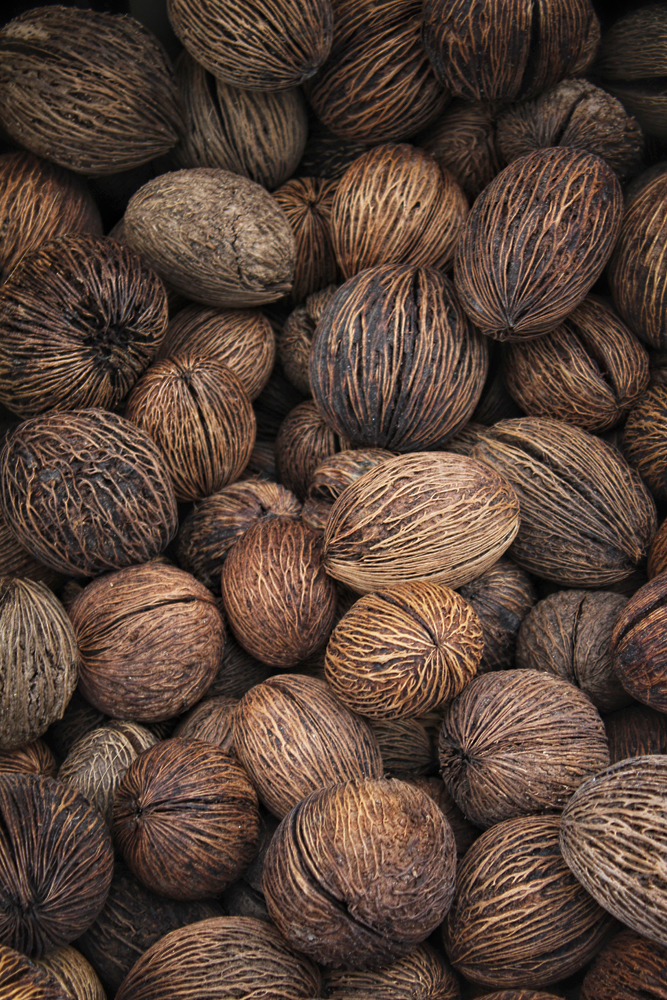 Buddha Palm Nuts. Image Credit: Travel Photographers Magazine
